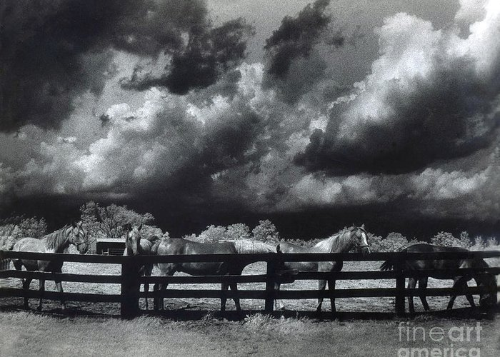 Surreal Infrared Horses Greeting Card featuring the photograph Horses Black And White Infrared Stormy Sky Nature Landscape by Kathy Fornal