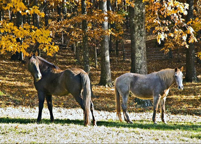 Animal Greeting Card featuring the photograph Horses In Autumn Pasture  by Susan Leggett