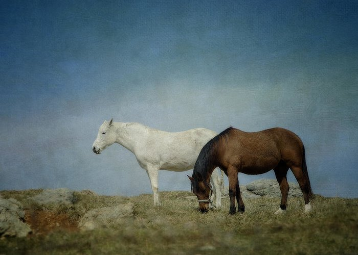 Horse Greeting Card featuring the photograph Horses On A Hill by Kathy Jennings