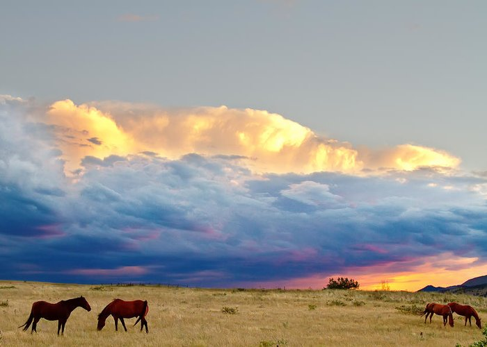 Horses Greeting Card featuring the photograph Horses On The Storm by James BO Insogna