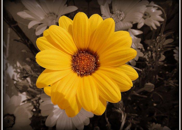 Sun Flower Greeting Card featuring the painting How Fresh... by Utkarsh Maheshwari