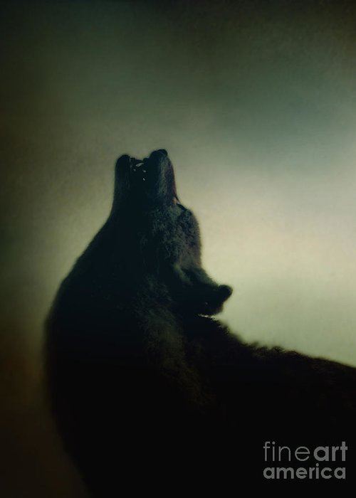 Wolf Greeting Card featuring the photograph Howling by Margie Hurwich