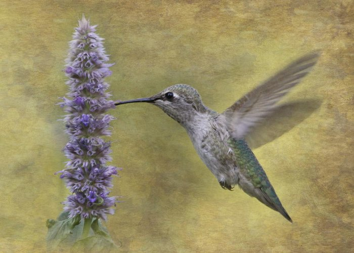 Hummingbird Greeting Card featuring the photograph Hummingbird In The Mint by Angie Vogel