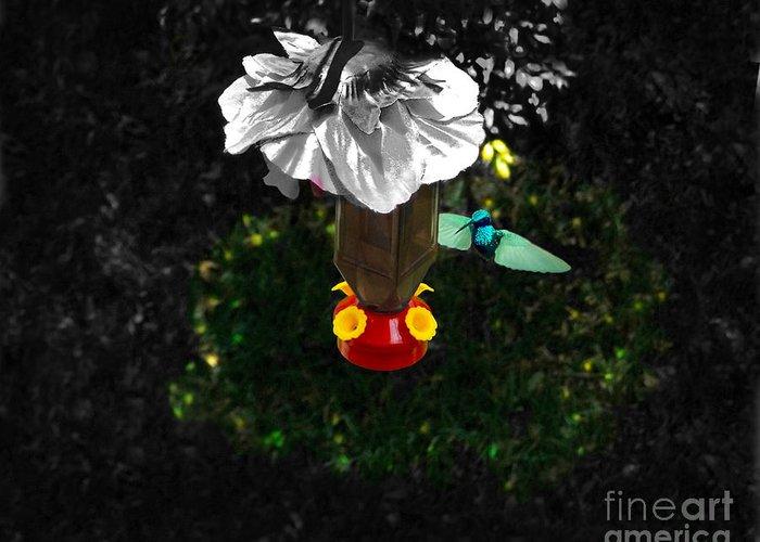 Bird Greeting Card featuring the photograph Hummingbird In The Spotlight by Al Bourassa