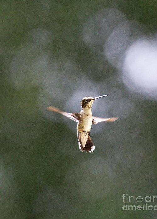 Hummingbird Greeting Card featuring the photograph Hummingbird Pauses Erect Misty Light by Wayne Nielsen