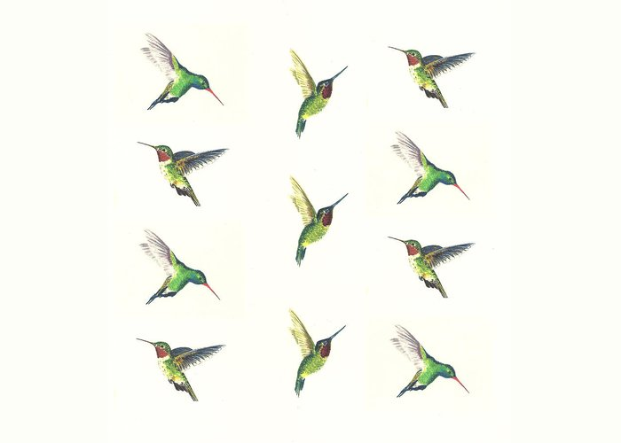 Broad Tailed Hummingbird Stationery