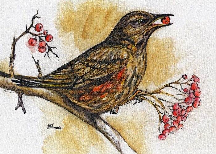Thrush Greeting Card featuring the painting Hungry Thrush by Angel Ciesniarska