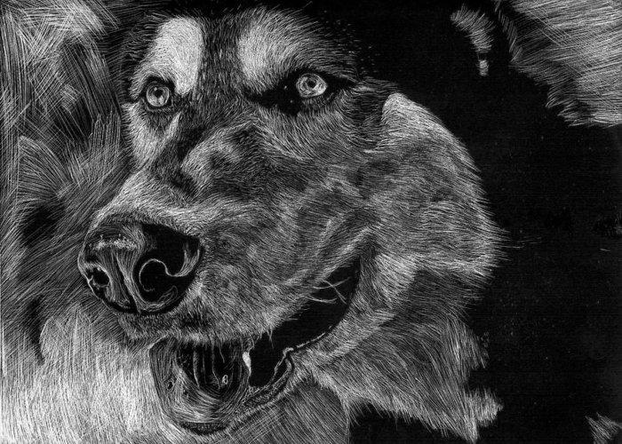 Husky Greeting Card featuring the drawing Husky by Lauren Alexandra