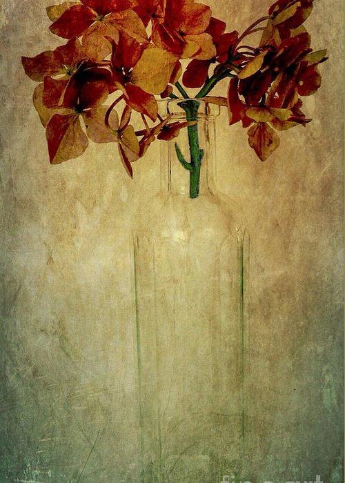 Hydrangea Greeting Card featuring the photograph Hydrangea by Elena Nosyreva