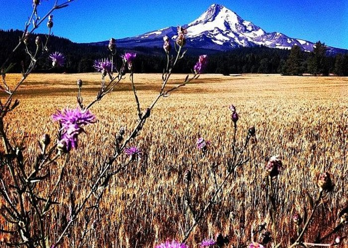 Beautiful Greeting Card featuring the photograph I Apologize For All The Mt Hood Shots by Mike Warner