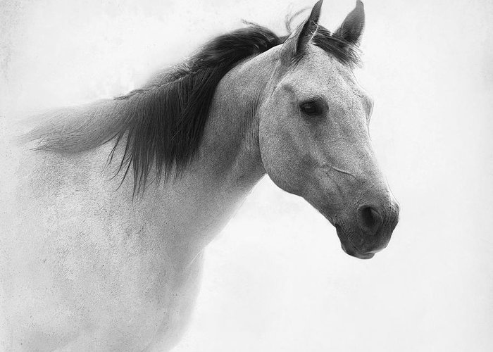Horse Greeting Card featuring the photograph I Dream Of Horses by Betty LaRue