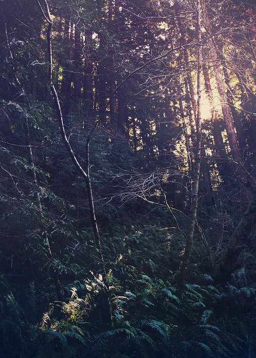 Purisima Creek Redwoods Open Space Preserve Greeting Card featuring the photograph I Realize by Laurie Search