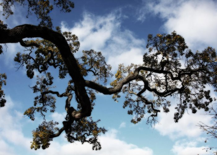 Trees Greeting Card featuring the photograph I Touch The Sky by Laurie Search