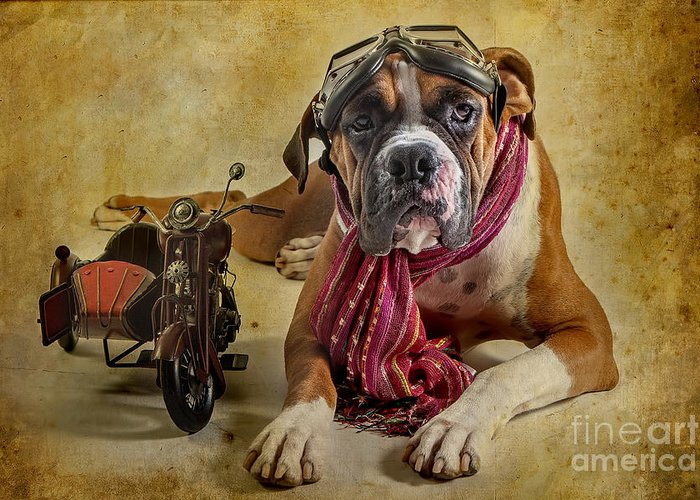Animal Greeting Card featuring the photograph I Want To Ride by Domenico Castaldo