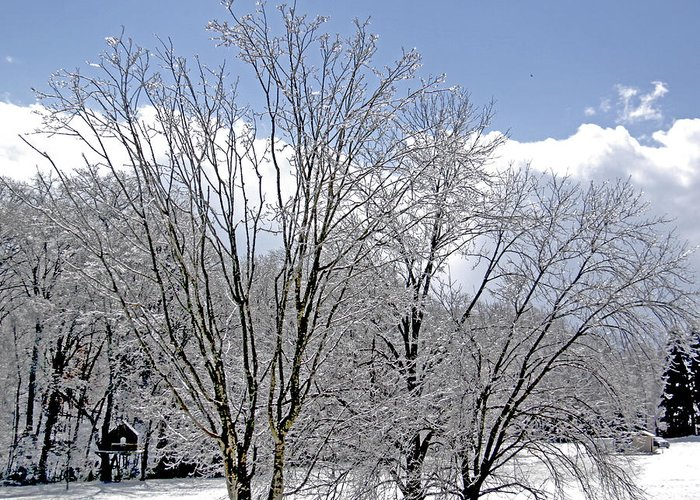 Ice Greeting Card featuring the photograph Ice Crystals by Linda A Waterhouse
