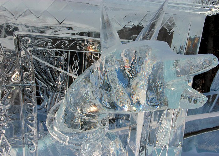 Ice Dog Greeting Card featuring the photograph Ice Dog by Laurel Butkins