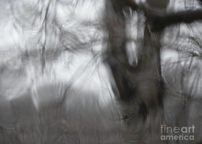 Abstract Greeting Card featuring the photograph Ice Storm Abstraction by Laura Yamada