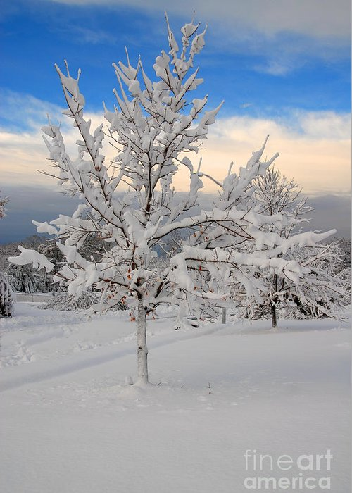 Ice Tree Greeting Card featuring the photograph Ice Tree by Fred Cerbini