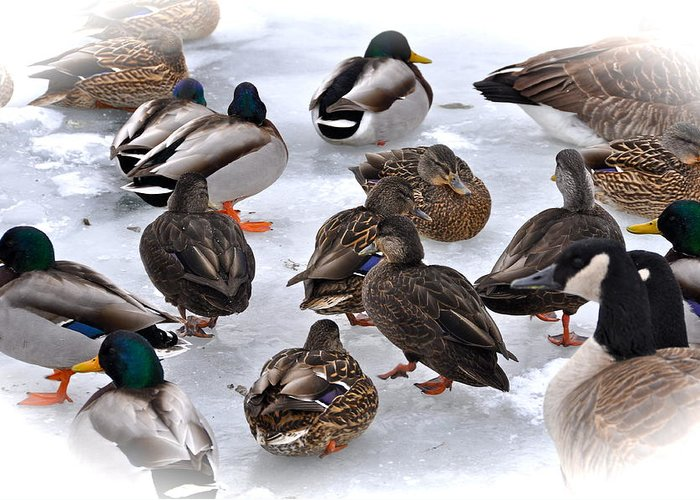 Duck Greeting Card featuring the photograph Ice Walkers by Catherine Renzini