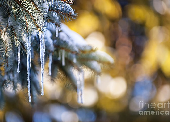 Icicles Greeting Card featuring the photograph Icicles On Fir Tree In Winter by Elena Elisseeva