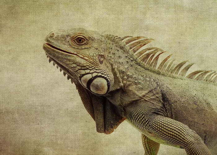 Iguanas Greeting Cards