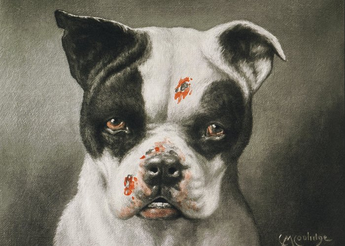 Boston Terrier Greeting Card featuring the painting I'm A Bad Dog What Kind Of A Dog Are You Circa 1895 by Aged Pixel
