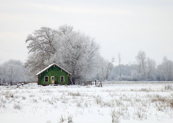 Shack Greeting Card featuring the photograph In A Sea Of White by Mike Dawson