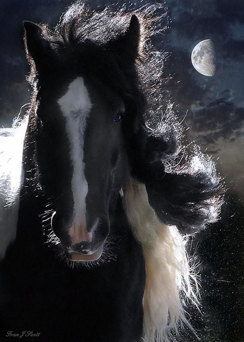 Horses Greeting Card featuring the photograph In Dreams... by Fran J Scott