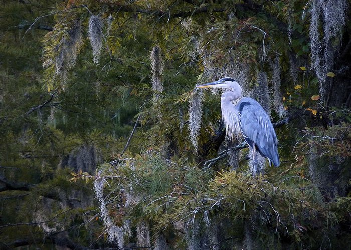 In His Element Greeting Card featuring the photograph In His Element by JC Findley