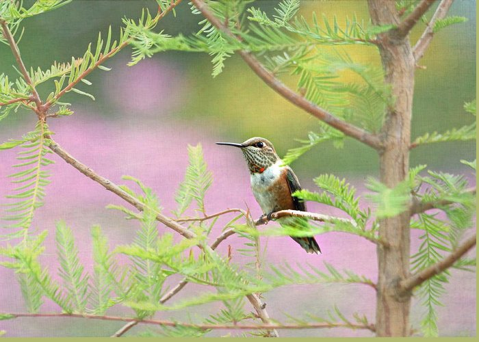 Hummingbird Greeting Card featuring the photograph In My Garden by Angie Vogel