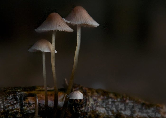 Mushrooms Greeting Card featuring the photograph In The Dark by Odd Jeppesen