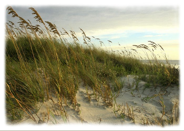 Beach Greeting Card featuring the photograph In The Dunes by Barbara Northrup