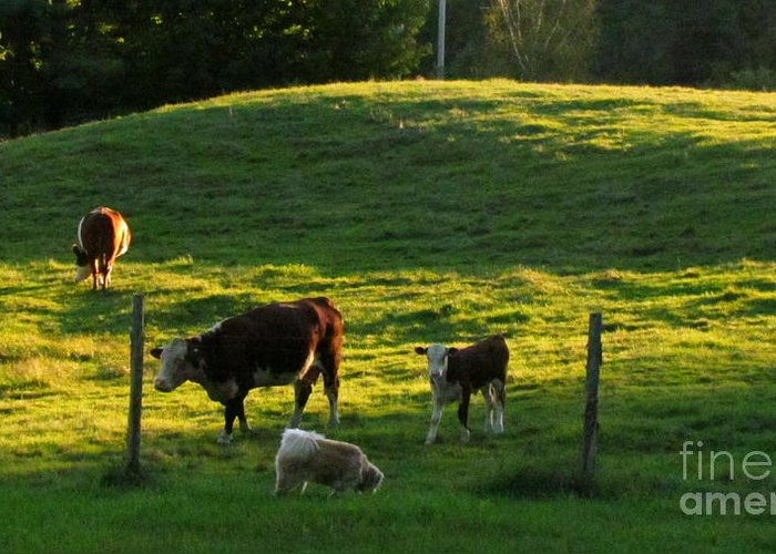 Cows Greeting Card featuring the photograph In The Field by Randi Shenkman