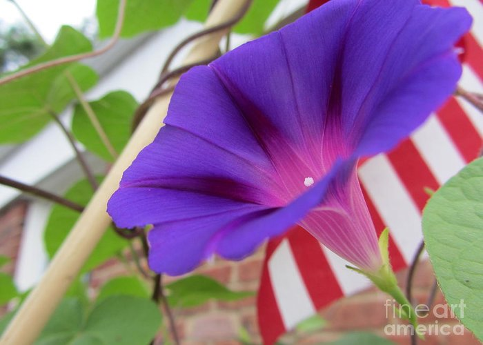 Flower Greeting Card featuring the photograph In The Morning - Summertime by Susan Carella