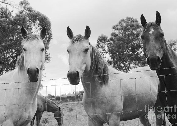 Horses Greeting Card featuring the photograph In The Open Air . . . by Sharon Mau