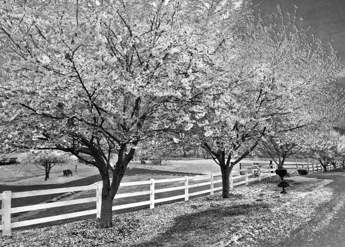 Andrews Greeting Card featuring the photograph In The Park by Debra and Dave Vanderlaan