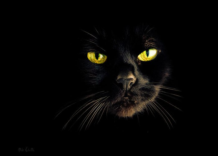 Animal Greeting Card featuring the photograph In The Shadows One Black Cat by Bob Orsillo