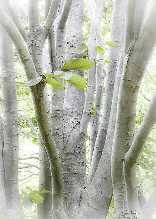 Woods Greeting Card featuring the photograph In The Woods by Julie Palencia