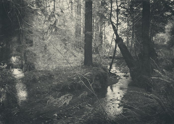 Purisima Creek Redwoods Open Space Preserve Greeting Card featuring the photograph In This Silence by Laurie Search