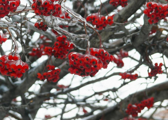 Red Berries Greeting Card featuring the photograph Incased Berries by Tracy Winter