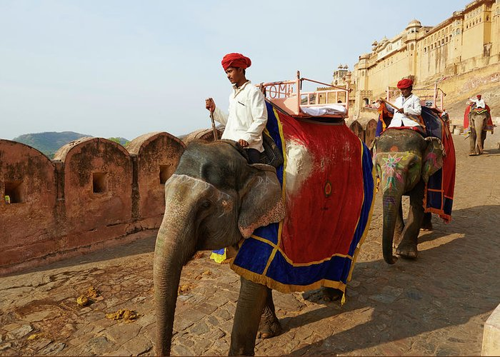 Working Animal Greeting Card featuring the photograph India, Rajasthan, Jaipur The Pink City by Tuul & Bruno Morandi
