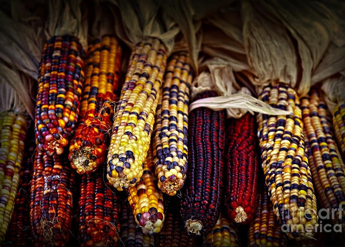 Corn Greeting Card featuring the photograph Indian Corn by Elena Elisseeva