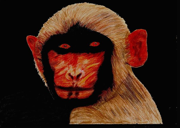 Monkey Stares Greeting Card featuring the drawing Indian Monkey by Sukhinder Gill