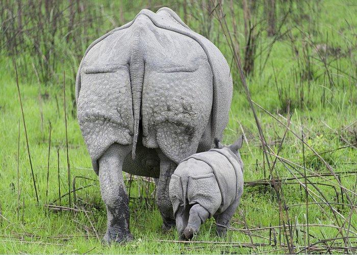 Rhinoceros Unicornis Greeting Cards