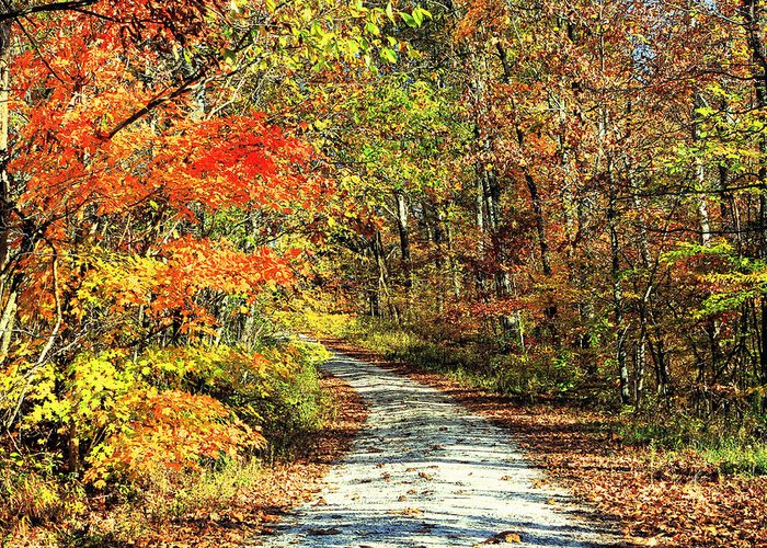 Autumn Greeting Card featuring the photograph Indiana Back Road by Lorna R Mills DBA Lorna Rogers Photography