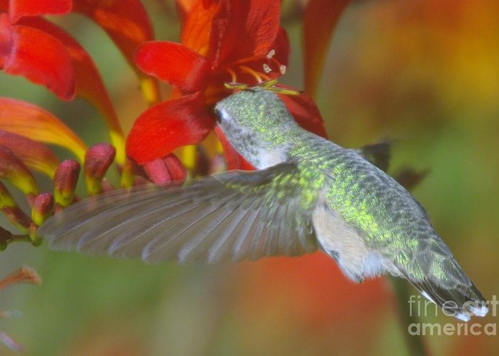 Wings Greeting Card featuring the photograph Indulgence by Jeff Swan