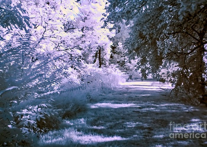 infra Red Greeting Card featuring the photograph Infrared Morning by Anthony Sacco