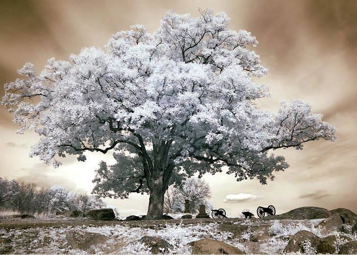 Civil War Greeting Card featuring the photograph Infrared Tree On A Hill In Gettysburg by Paul W Faust - Impressions of Light