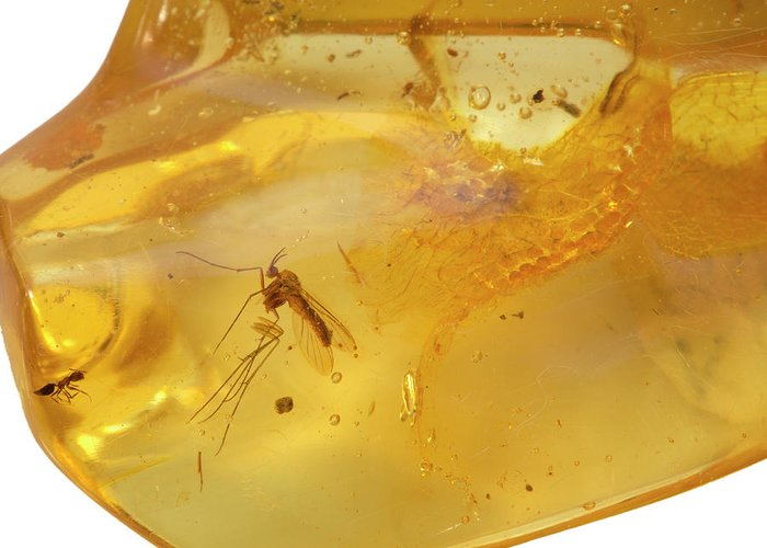 Colombia Greeting Card featuring the photograph Insects In Fossil Amber by Science Stock Photography