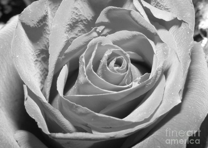 Rose Greeting Card featuring the photograph Intimate by Melissa Lightner